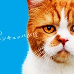 【ワイモバイル】6月1日から「ワンキュッパ割」をスタート!!
