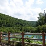 【旅行】美瑛町にある「青い池」に行ってきたぞ!!