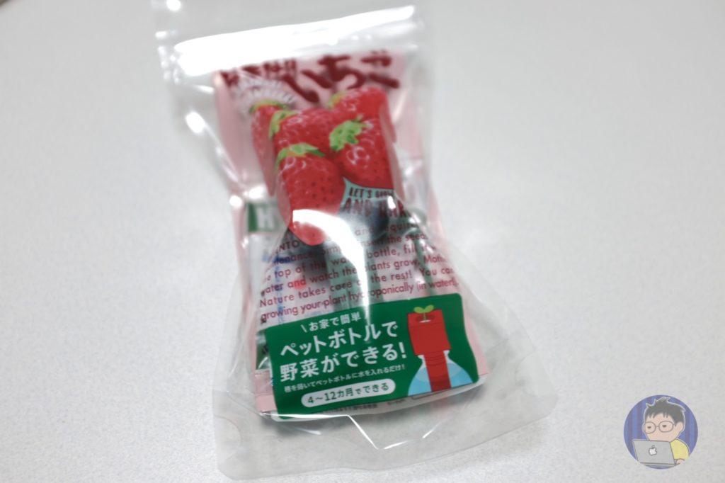ペットボトルで「いちご」を育てる!?500円で水耕栽培が楽しめる!!